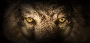 The wolf is at the door for senior living.